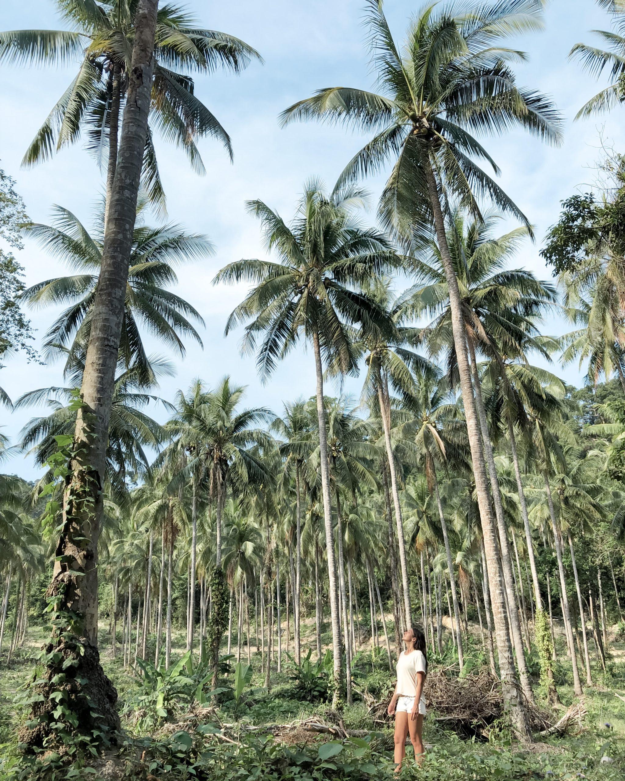 Thaïlande: 5 bonnes raisons de séjourner à Koh Ngai